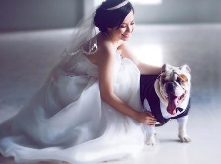 Mốt chụp ảnh cưới với thú cưng