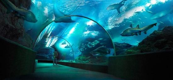 Đến Siam Ocean World là một lựa chọn tuyệt vời cho các cặp đôi trong tuần trăng mật.