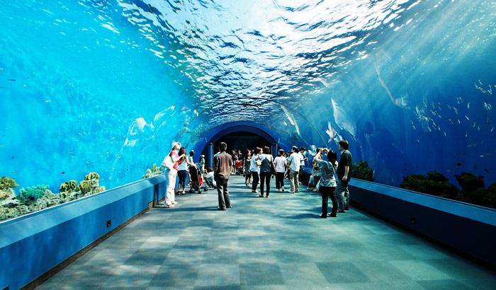 Siam Ocean World đẹp tuyệt vời