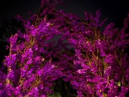Cổng hoa cưới màu tím đầy huyền ảo