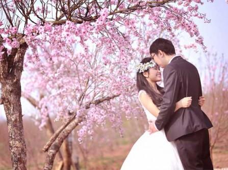 Địa điểm chụp ảnh cưới: vườn hoa Phương Linh - Hà Nội