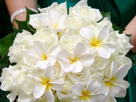 Hoa cưới cầm tay kết từ hoa sứ trắng