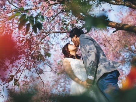 Chụp ảnh cưới ở Đà Lạt đẹp như mơ với hoa anh đào