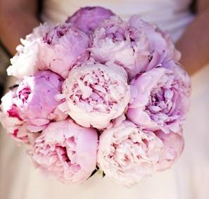 Hoa cưới cầm tay cô dâu mẫu đơn gam tím lãng mạn