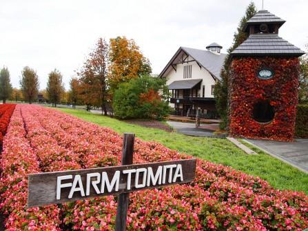 Địa điểm chụp ảnh cưới: Cánh đồng hoa ở Nhật Bản