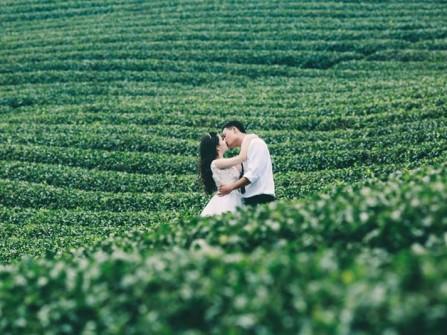 Địa điểm chụp ảnh cưới: Đồi chè Đà Lạt, Lâm Đồng