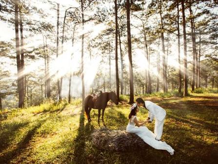 Địa điểm chụp ảnh cưới: Rừng thông Đà Lạt, Lâm Đồng