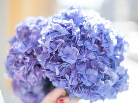 Hoa cầm tay cô dâu kết từ hoa cẩm tú cầu xanh ngọt ngào