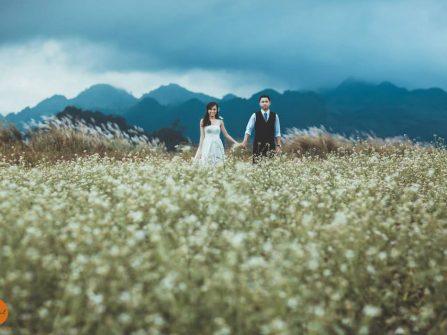 Địa điểm chụp ảnh cưới: Cánh đồng hoa Mộc Châu, Sơn La