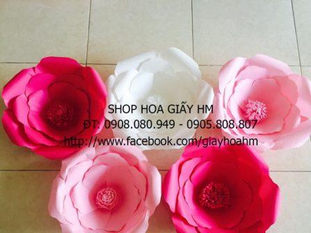 Shop Hoa Giấy HM