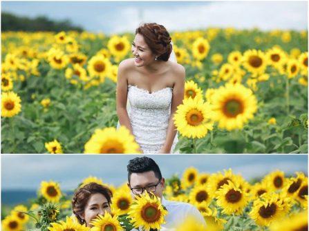 Địa điểm chụp ảnh cưới: Cánh đồng hoa hướng dương, Lâm Đồng