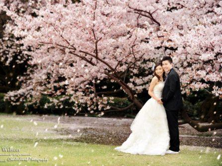 Địa điểm chụp ảnh cưới đẹp tại các vùng trồng hoa nổi tiếng Nhật Bản