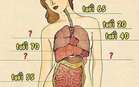 13 cột mốc thoái hoá của cơ thể: 20 tuổi bắt đầu già đi, sang 35 vòng một teo tóp